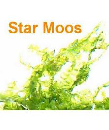 1 Portion Star Moos, 5x7 cm, Garnelen Moose